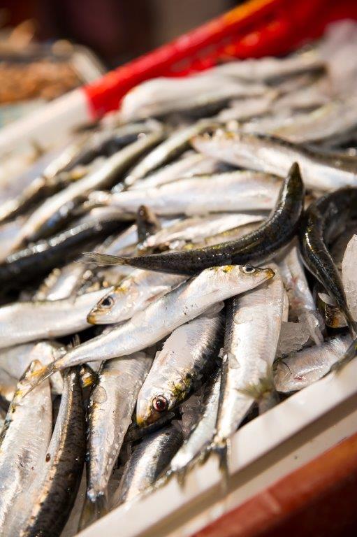 pêche à la sardine Saint Gilles Croix de Vie