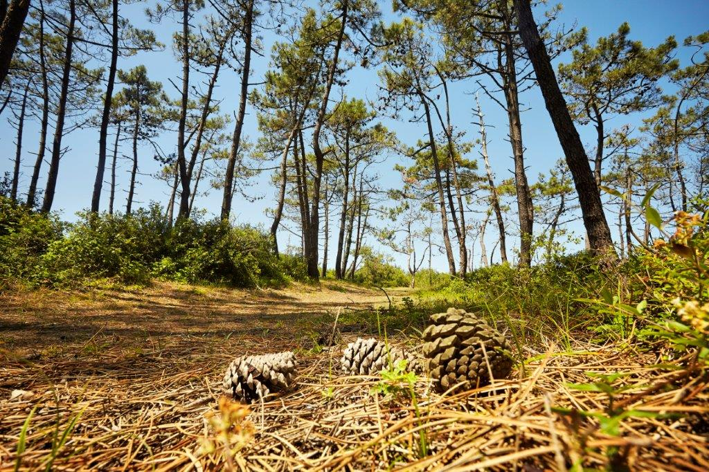 camping proche des forets
